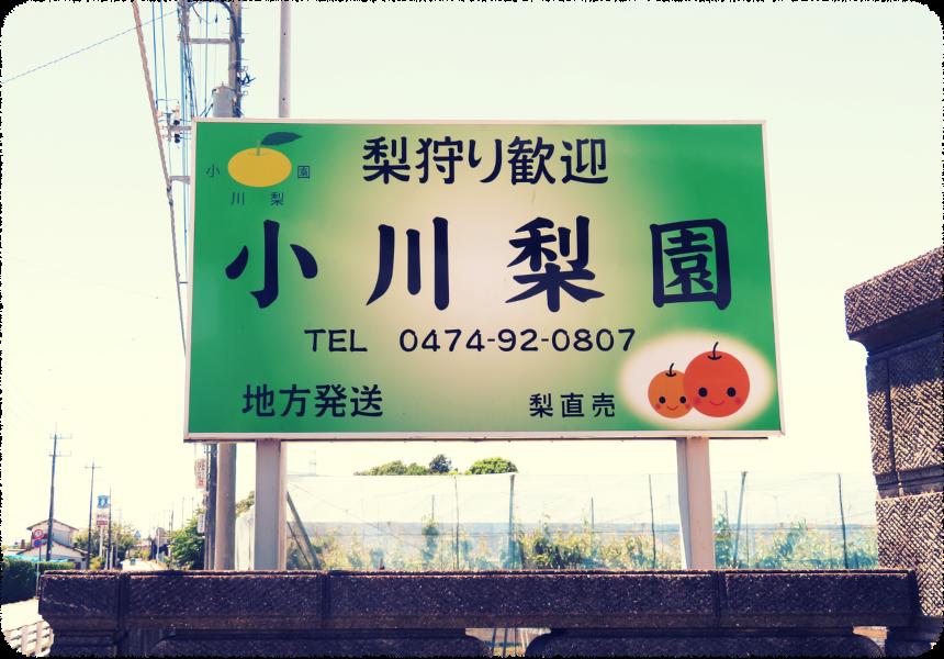 小川梨園の梨狩り体験