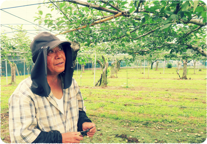 梨のナカムラ園